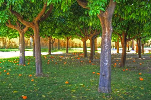 Il giardino degli aranci port of rome civitavecchia - Il giardino degli aranci frattamaggiore ...
