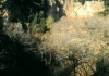 cave-alunite