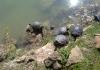 15-tartarughe-a-villa-ada-laghetto-1