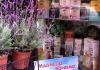 erboristeria-la-mimosa-vetrina_0
